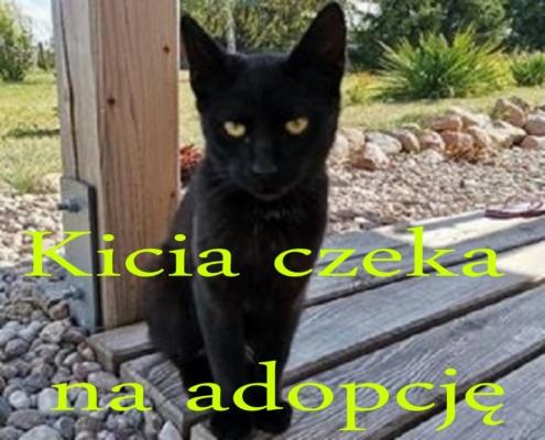 Zachęcamy do adopcji kici, kotki