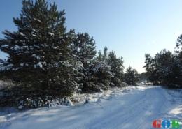 Janów Podlaskiw zimowej scenerii
